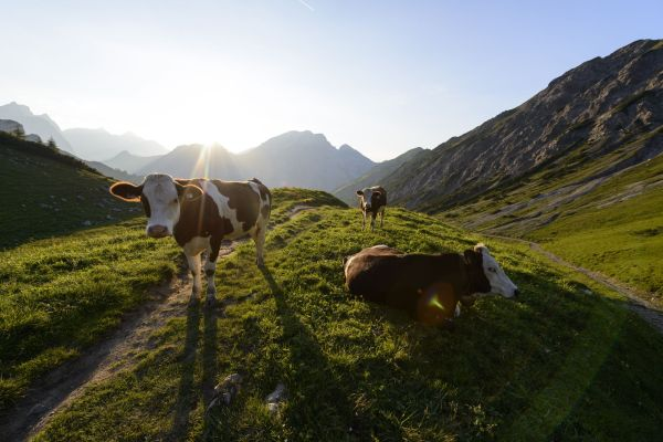 Guide for safety on the alpine pasture